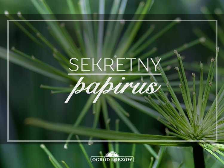 sekretny papirus